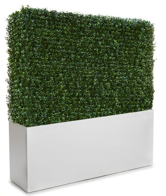 Where to find Boxwood Hedge 4 in Toronto